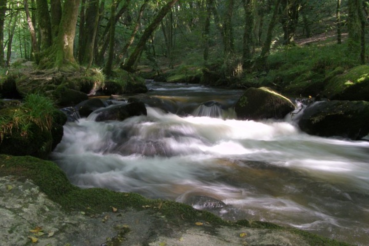 Not a beach in sight! Peace and tranquillity reign at Golitha Falls near Bodmin Moor.
