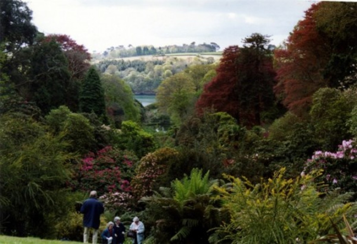 The exquisitely cultivated Trebah garden allows visitors to explore an enchanting valley of subtropical flora.