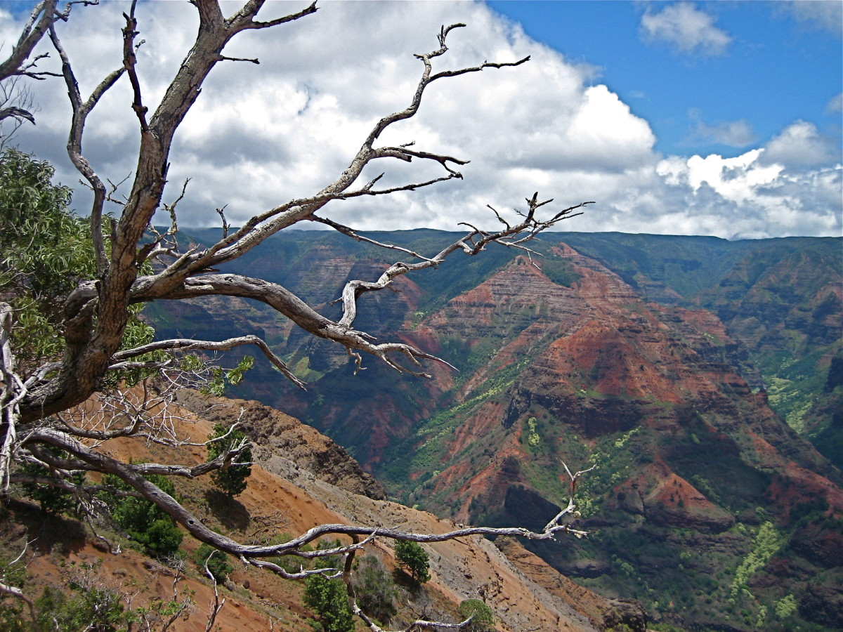 Waimea Canyon's arid landscape is a contrast to the tropical greenery on the opposite side of the mountain.