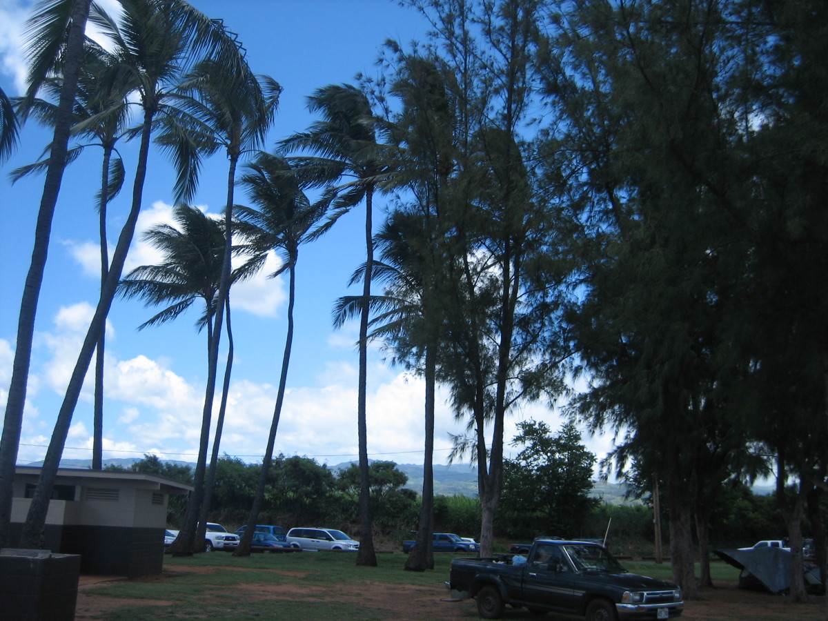 Palm Trees and azure views abound in Hawaii