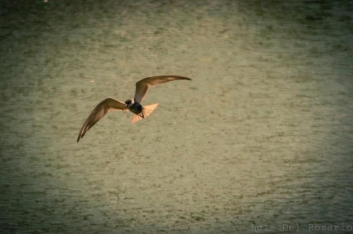 Bird-watching in Nuvali is simply amazing!