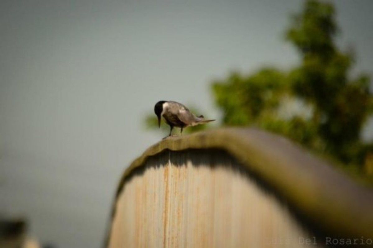 Various types of birds can be seen in the serene place in Laguna called Nuvali