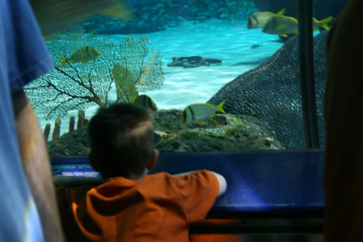 Sea turtles, several species of fish, and Moray eels also call this tank home.