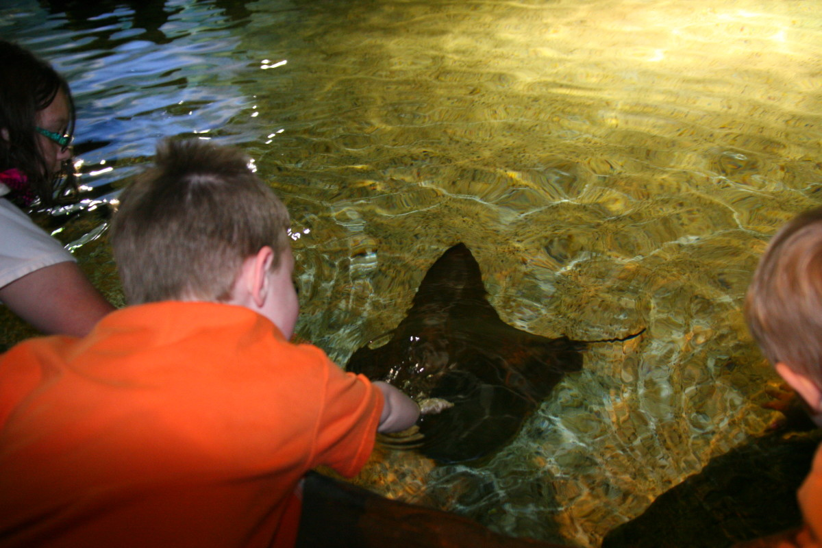 Attempting to touch a stingray, but the water was too deep. There was a long line behind us to see this attraction.