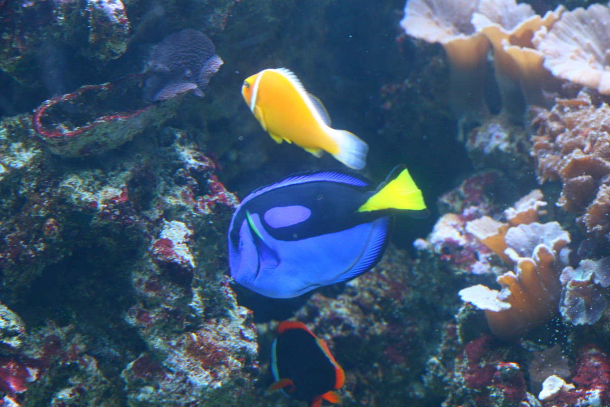 "Our boys loved these fish and were excited to see a real life ""Nemo"" and ""Dory."""