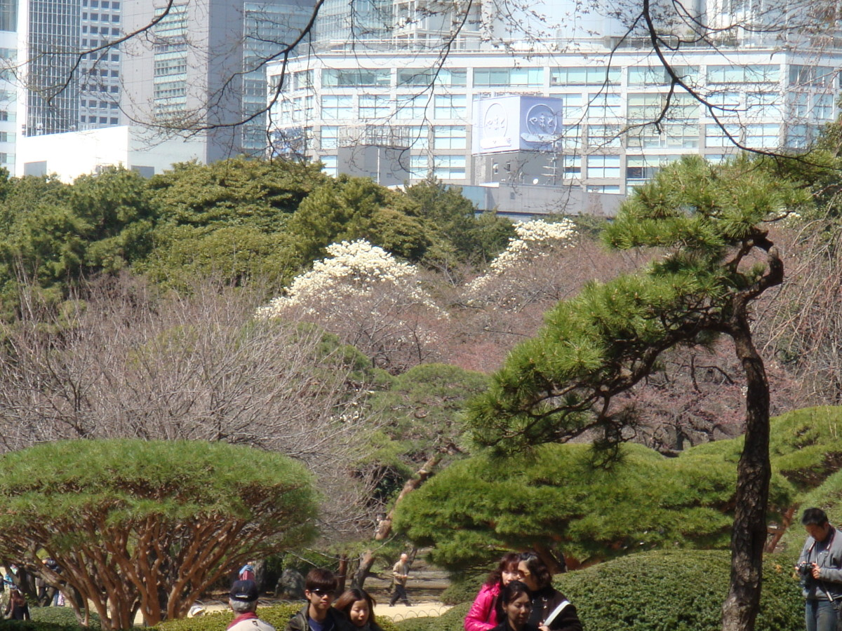 Shinjuku Park, greenery abounds in the middle of the crowded and modern Shinjuku district