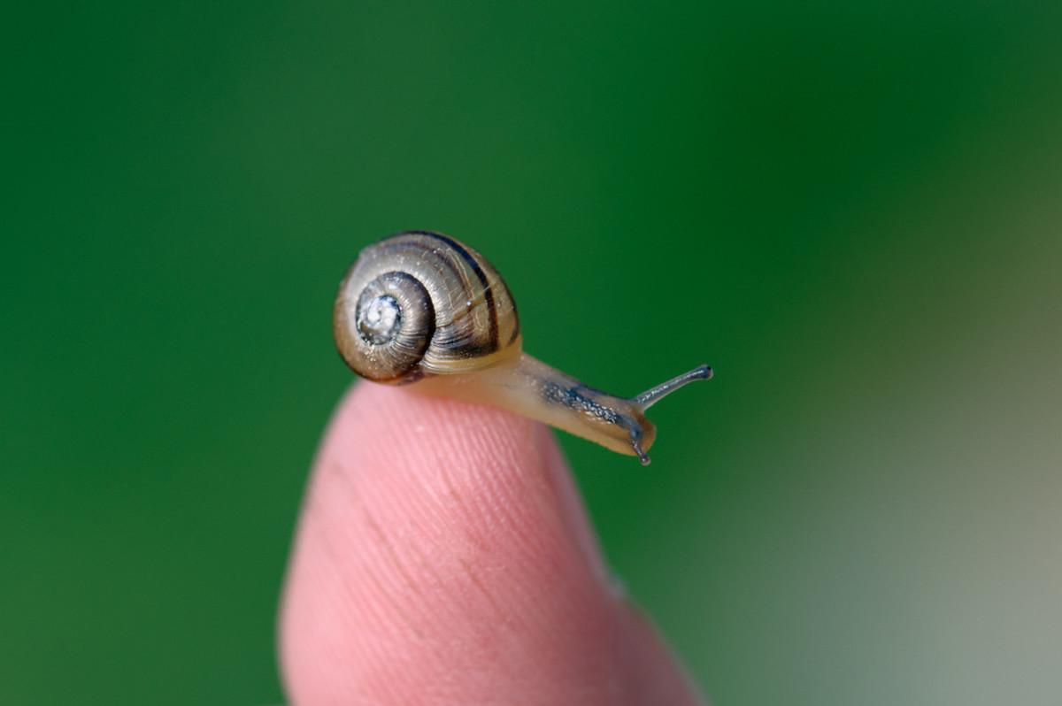international-snail-racing-championships