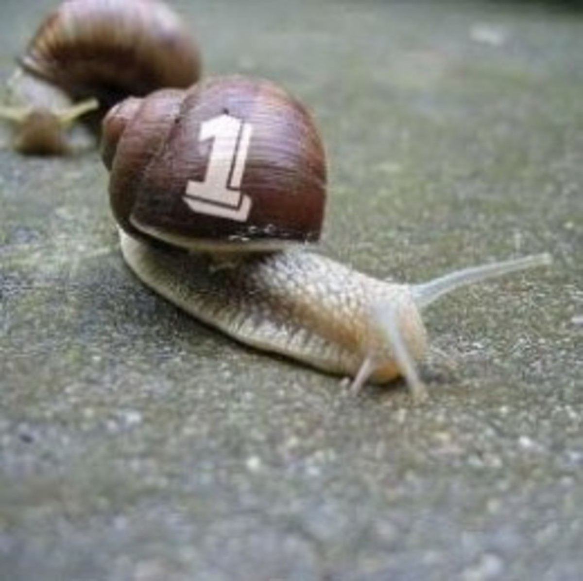 The first snail race