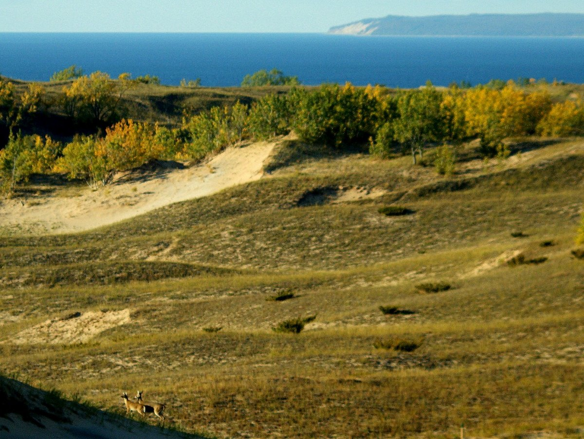 Dunes and Lake Michigan.  Two deer are standing in the bottom left of the photo