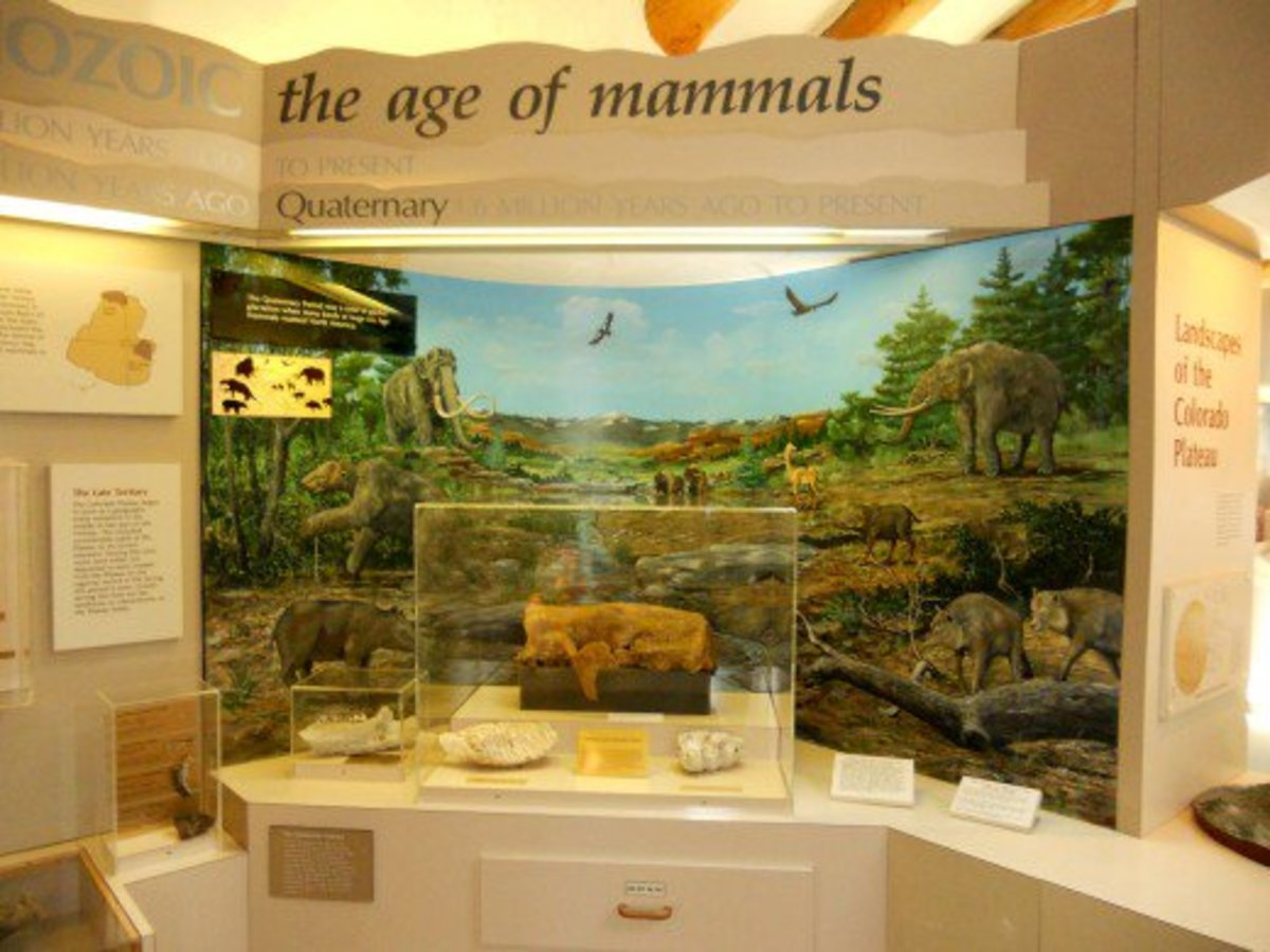 The age of mammals
