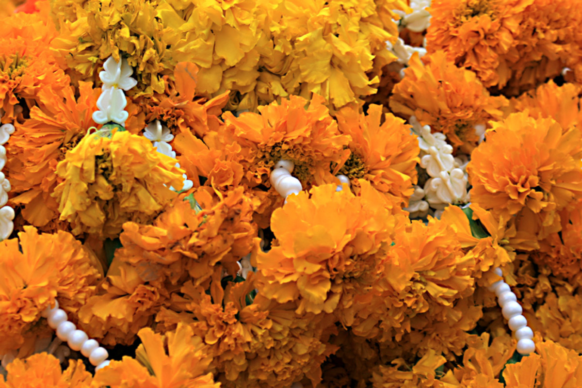 The brilliance of the flower garlands makes the shrine a colourful spectacle