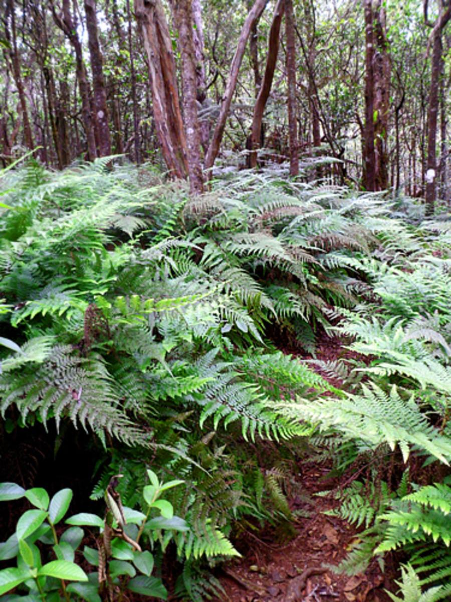 Nature hiking trail