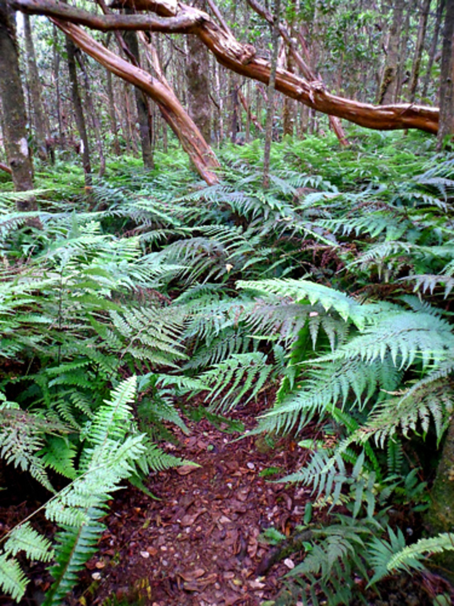 Follow the fern-lined trail to explore the forest
