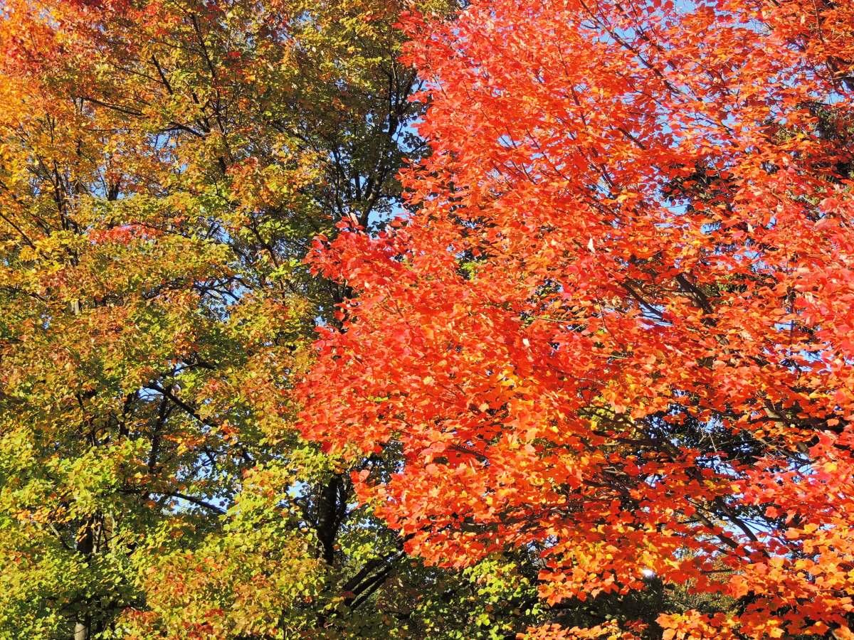 Upper Michigan fall color
