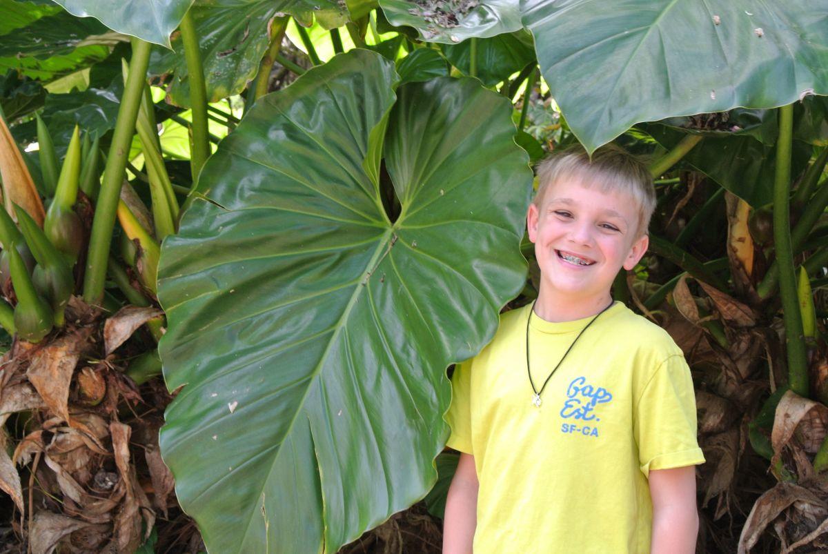 Giant philodendrum leaf - Waimea Valley, Oahu