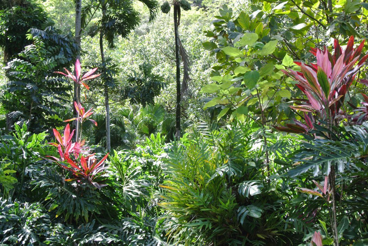 Lush botanical gardens in Waimea Falls Park