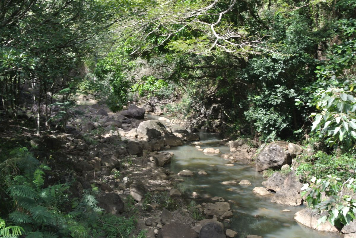 Stream running through the Waimea Falls Park