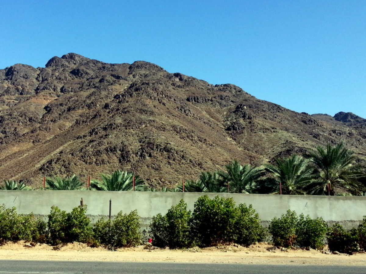 The journey to Wadi al Jinn, Madinah's Magnetic Hill are full of date palm plantations, on both sides of the road.