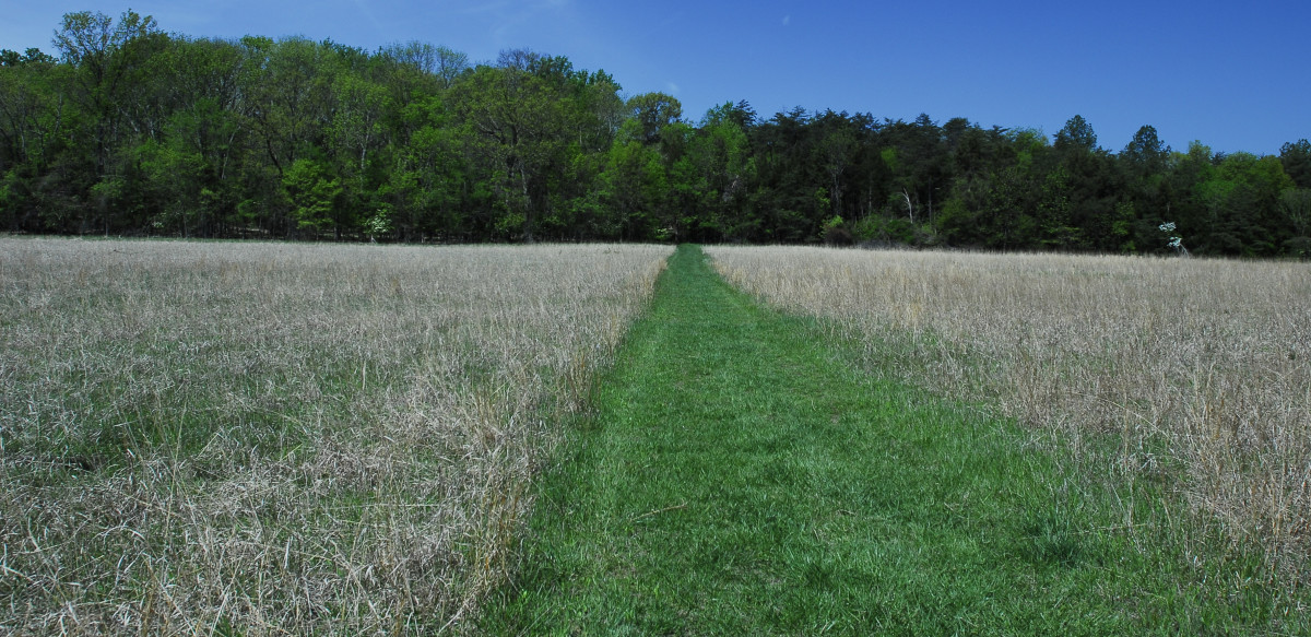 This is a wonderful mowed path by the headquarters building off of Route 29.  I love the leading line heading into the woods.