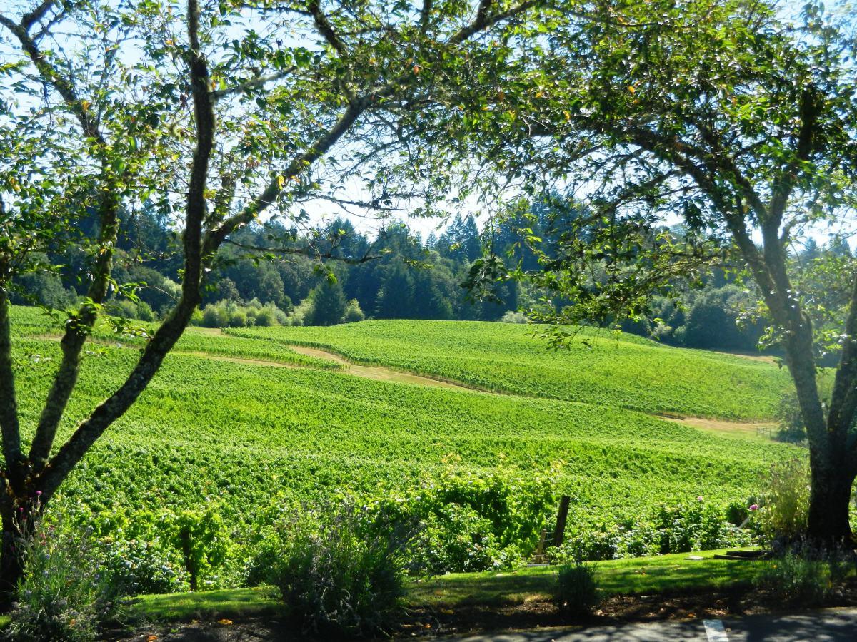 Vineyards at Elk Cove.
