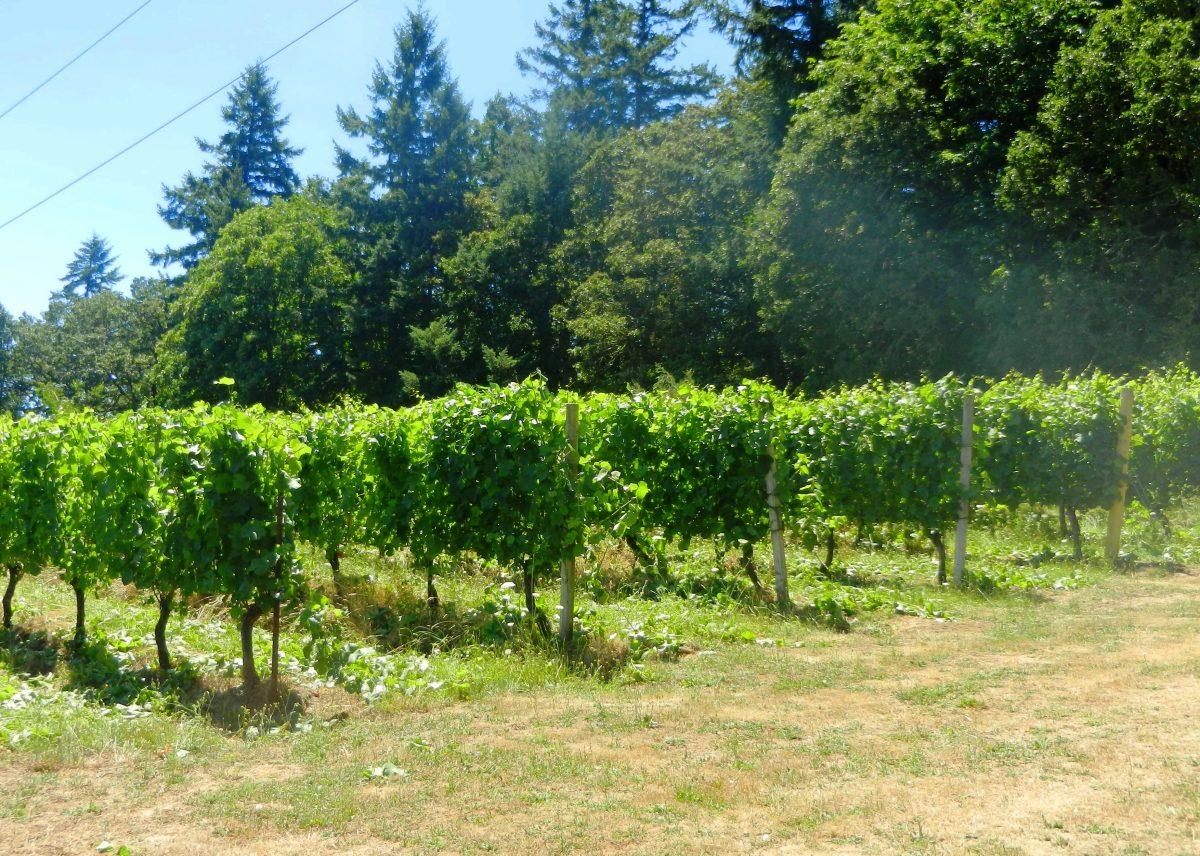 Redhawk vines