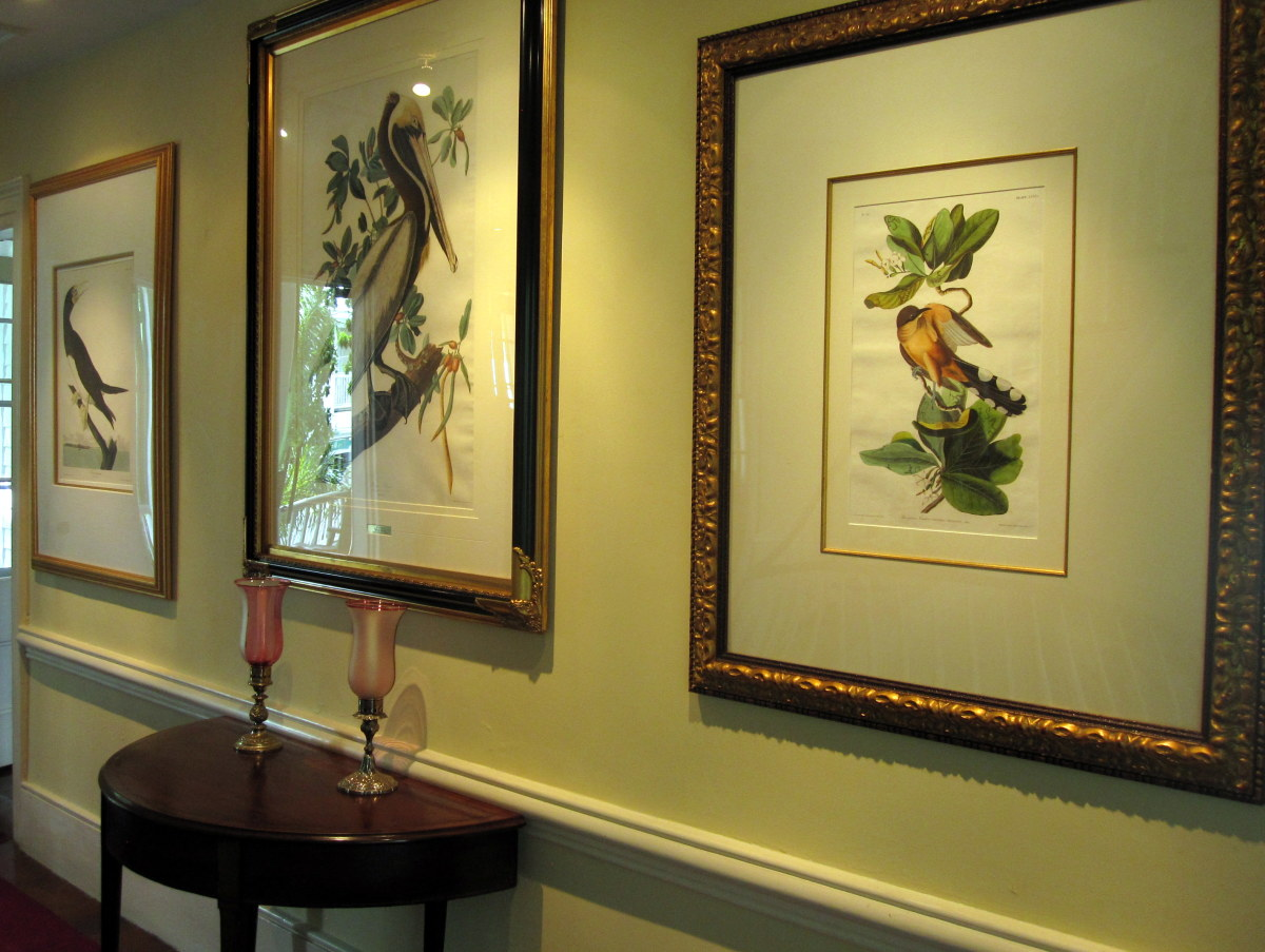 Original Audubon prints on display