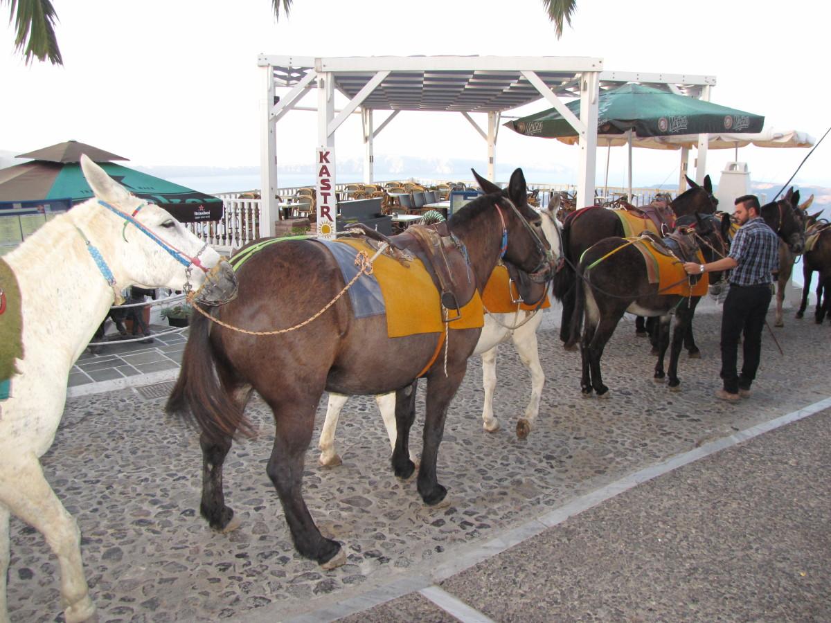 The Mules of Santorini.
