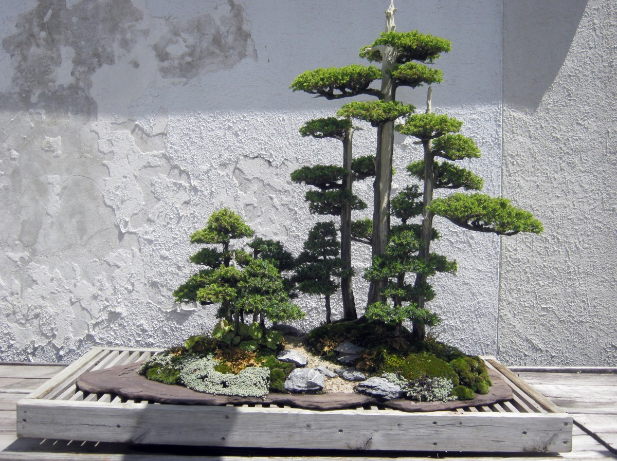 Bonsai Gallery From The US National Arboretum WanderWisdom - Us national arboretum google maps