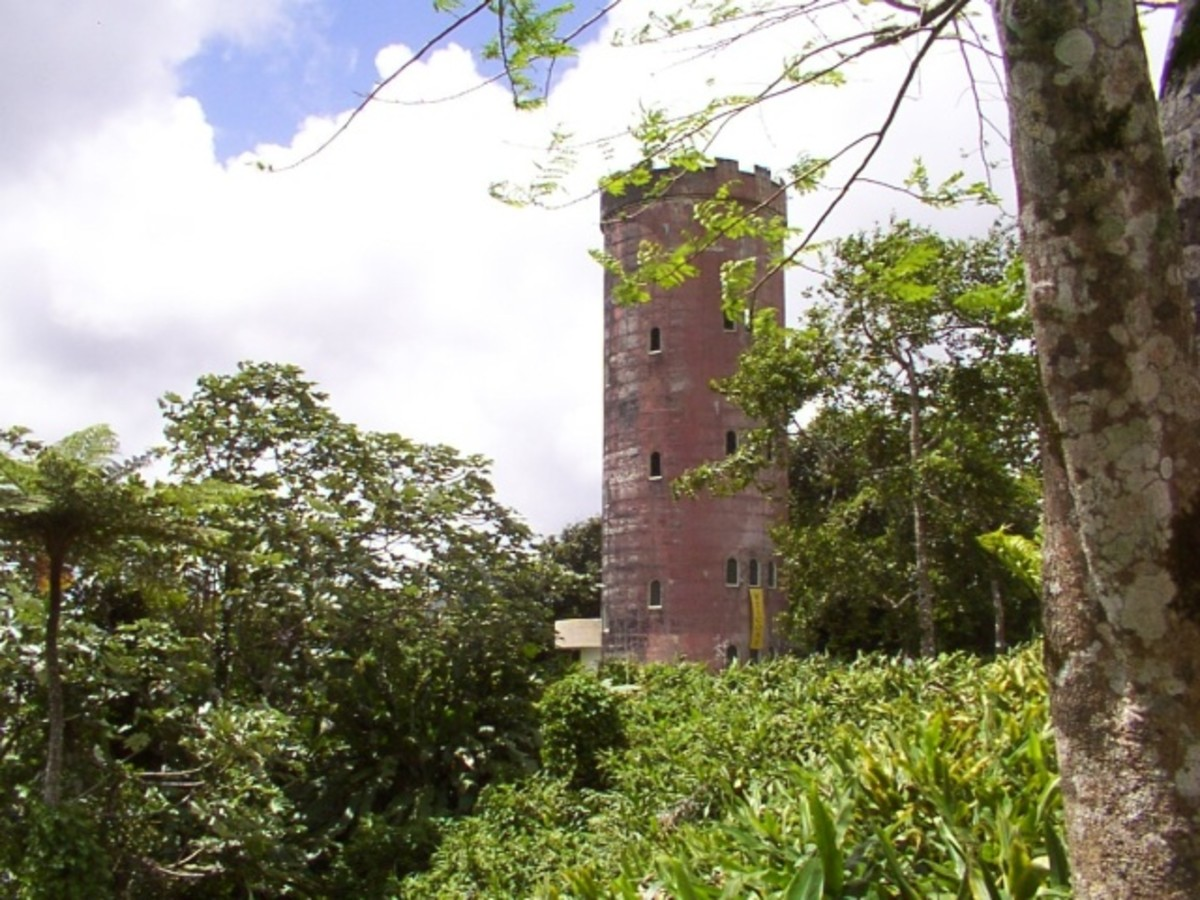 One of the observation towers inside the rainforest