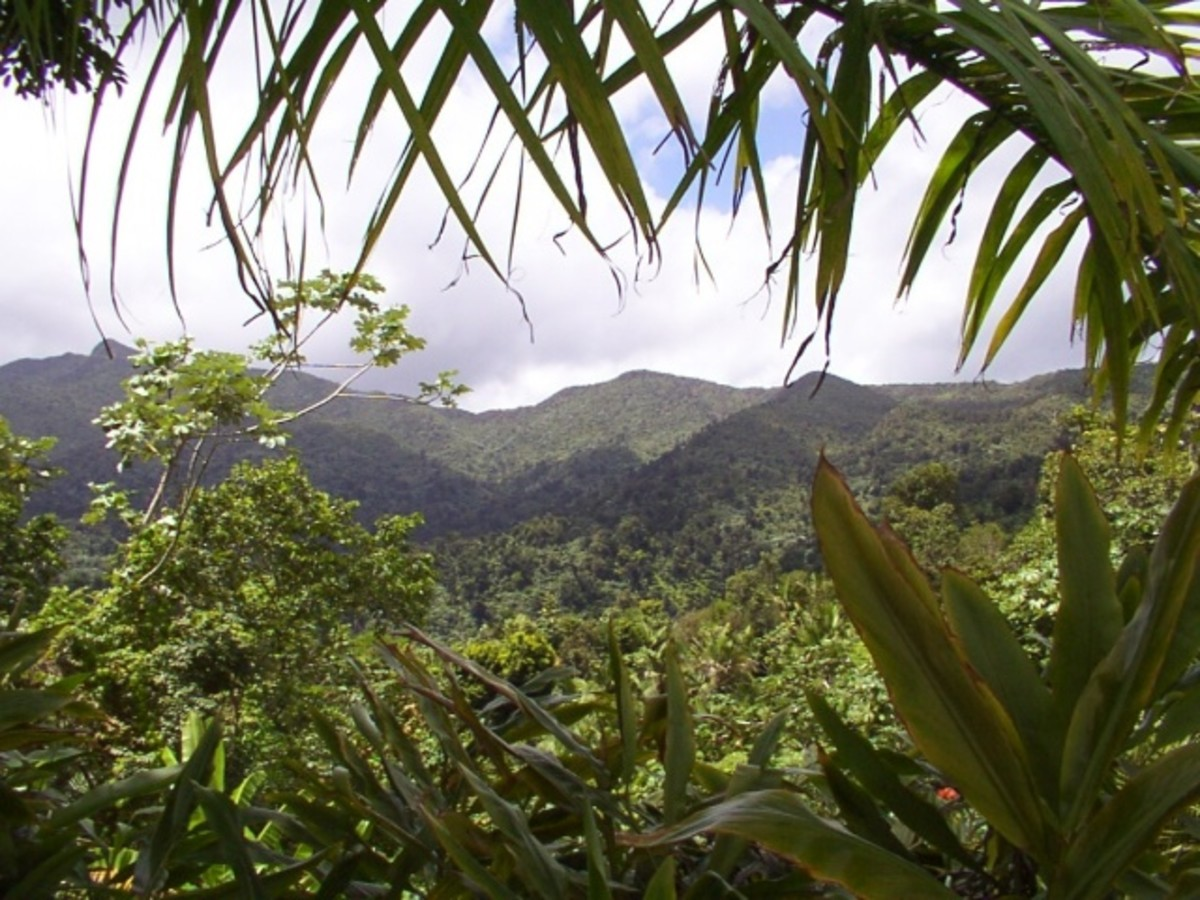 El Yunque: a perfect postcard picture!