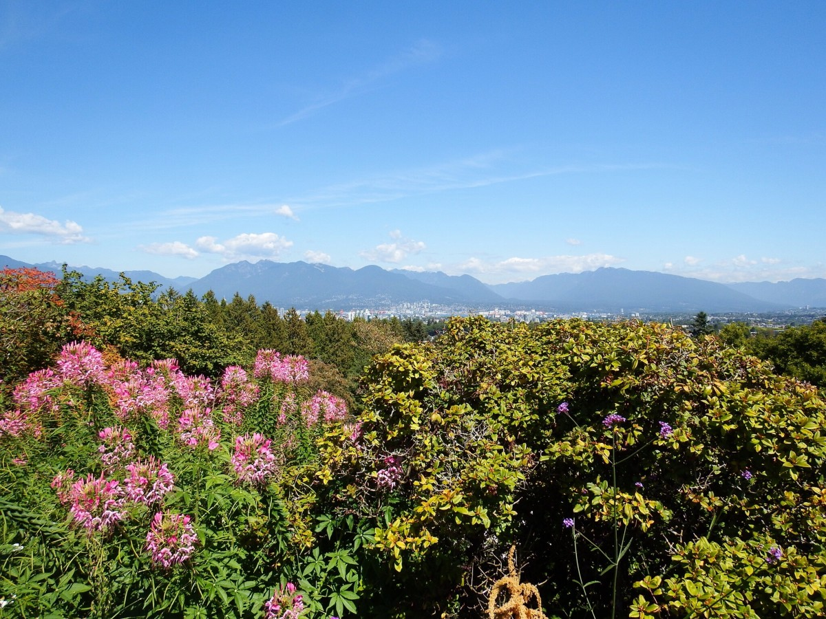 A view of the Coast Mountains from a high point in Queen Elizabeth Park