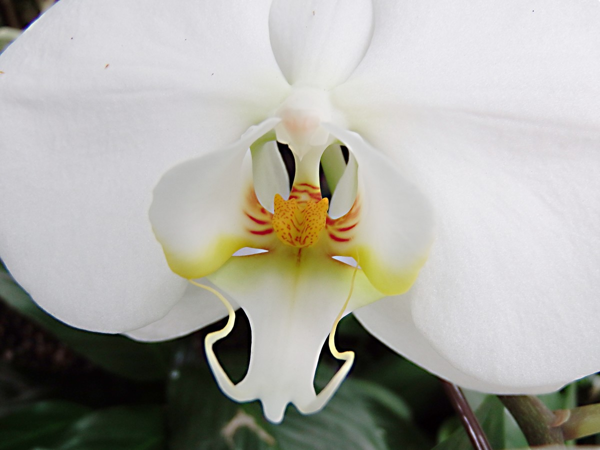 A close-up view of an orchid at the conservatory