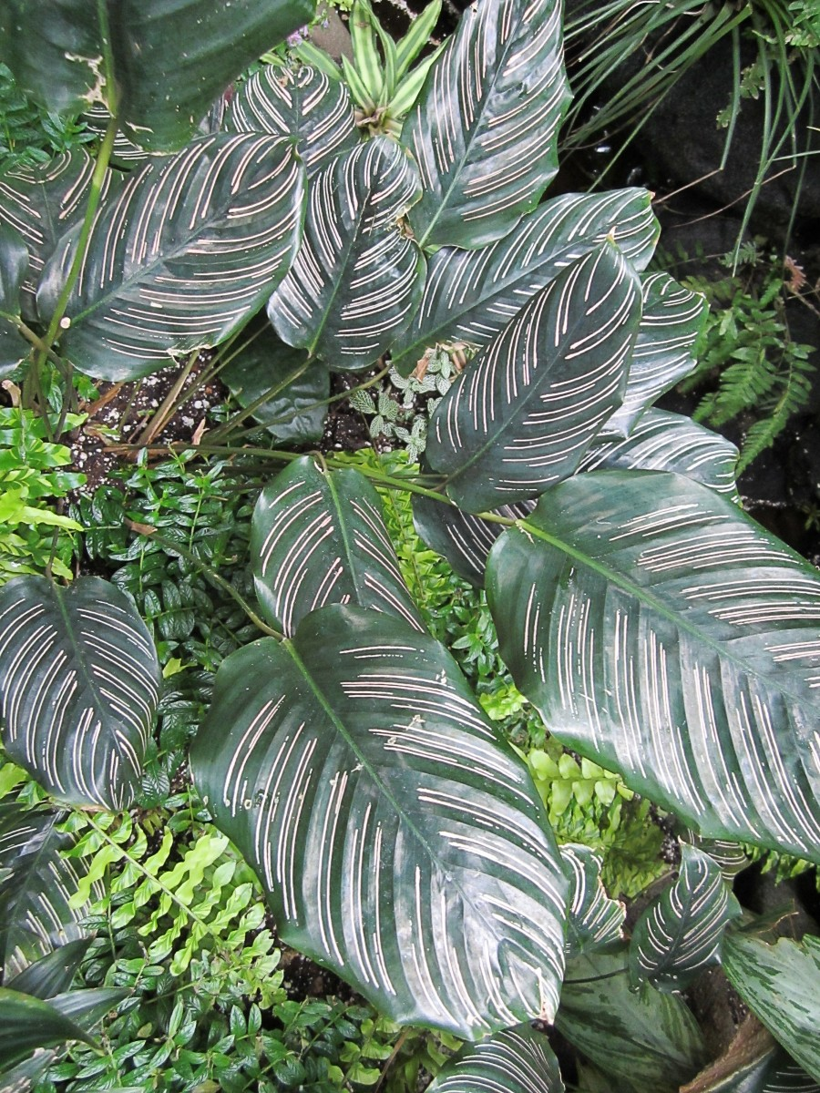 Colours and stripes can create attractive patterns on leaves.