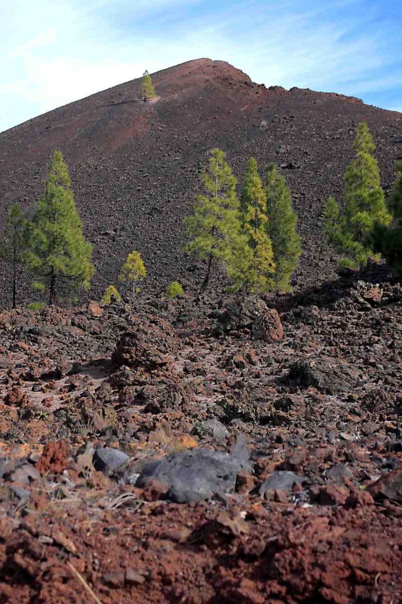 The landscape surrounding El Chinyero - site of the most recent eruption in 1909
