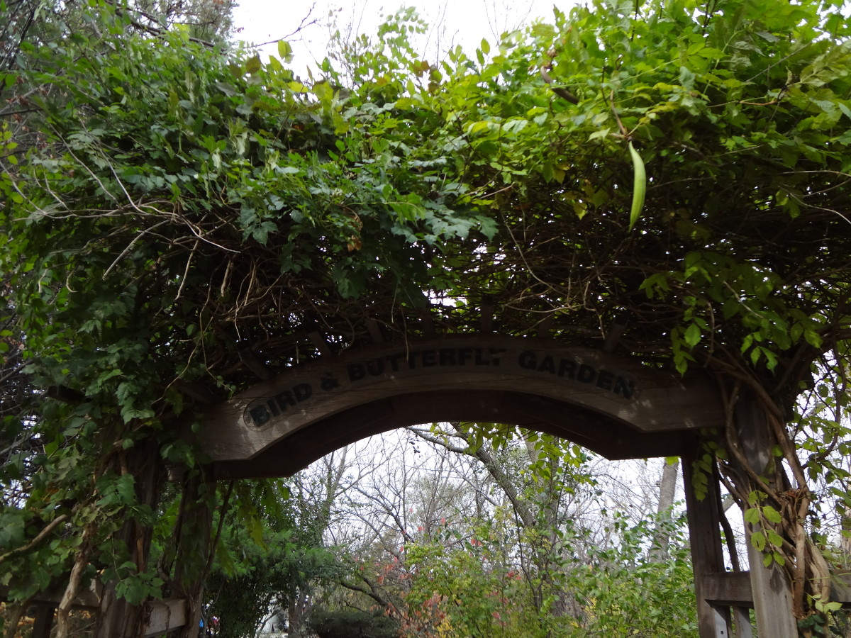 """One of several """"Secret Gardens"""" near the waterfall"""