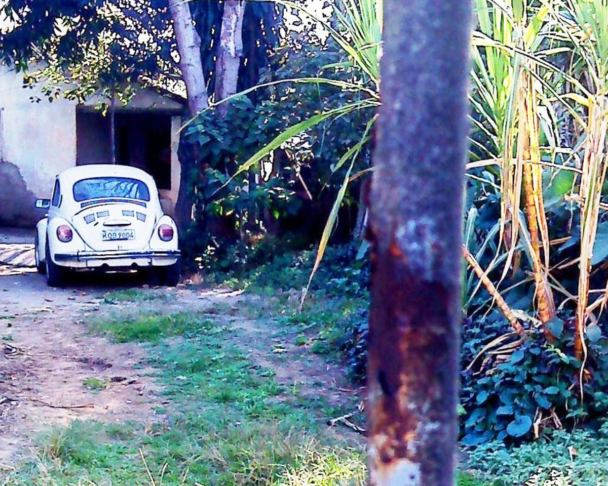 A VW Beetle hiding in a garden.