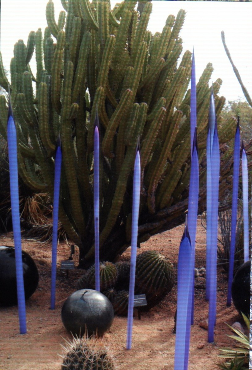 Purple sprouts around the organ pipe cactus