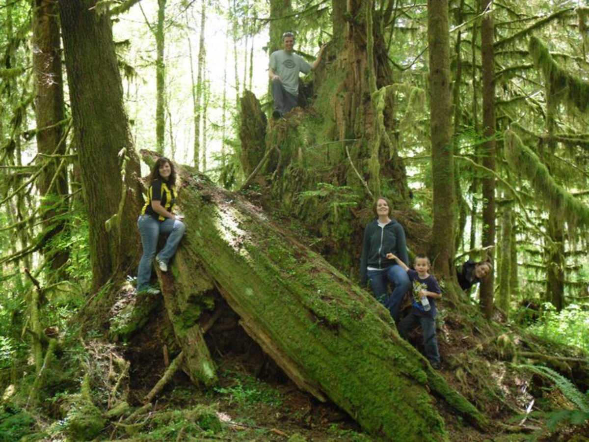 The rain forest on the Olympic Peninsula is full of beautiful hikes that will take your breath away.