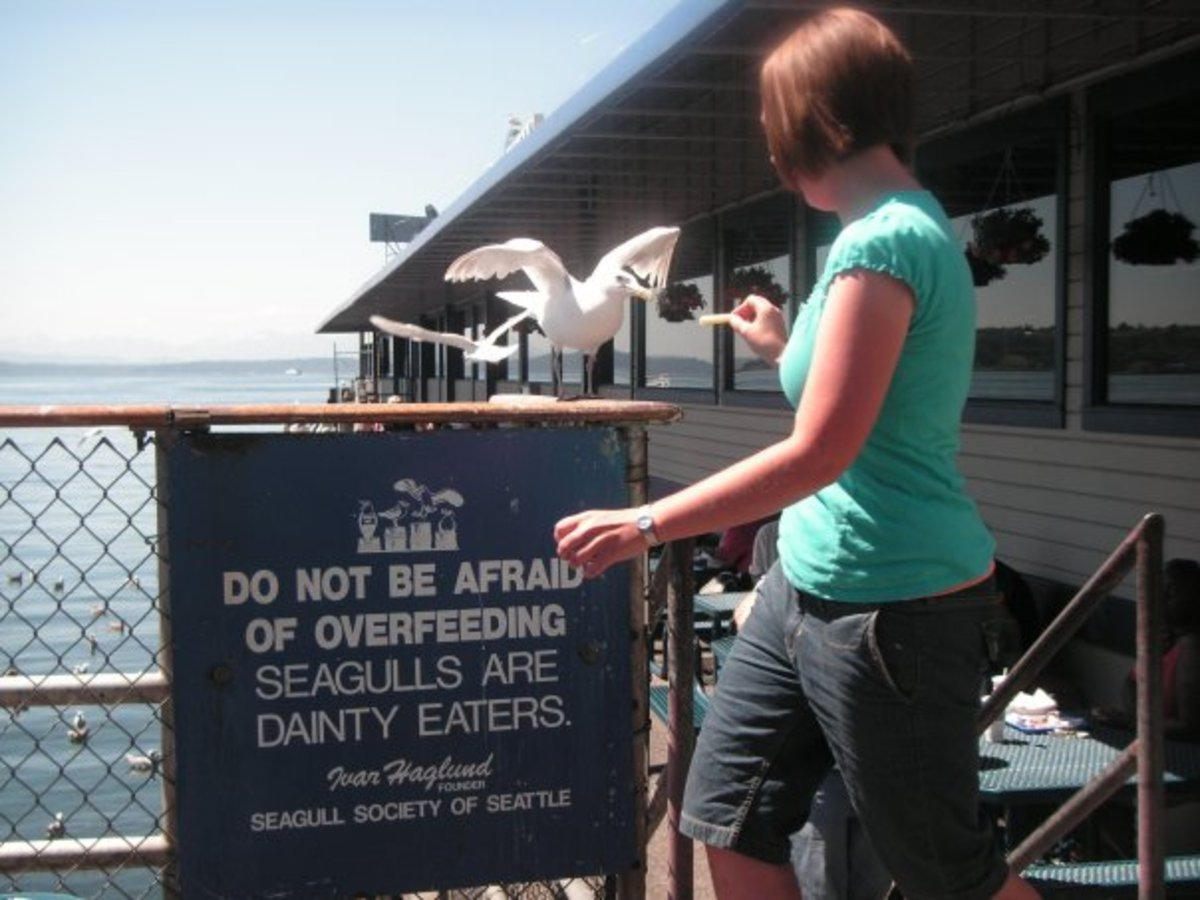Don't forget to feed the seagulls at Ivar's!