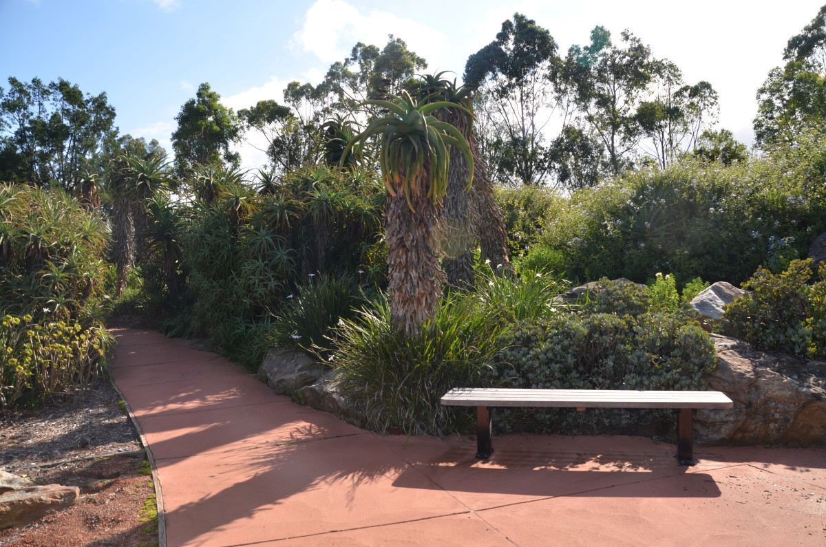 The African Garden