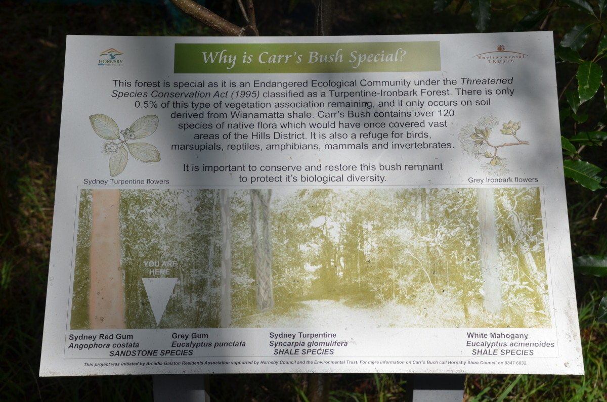 Fagan Park is home to it's very own bush: Carr's Bush