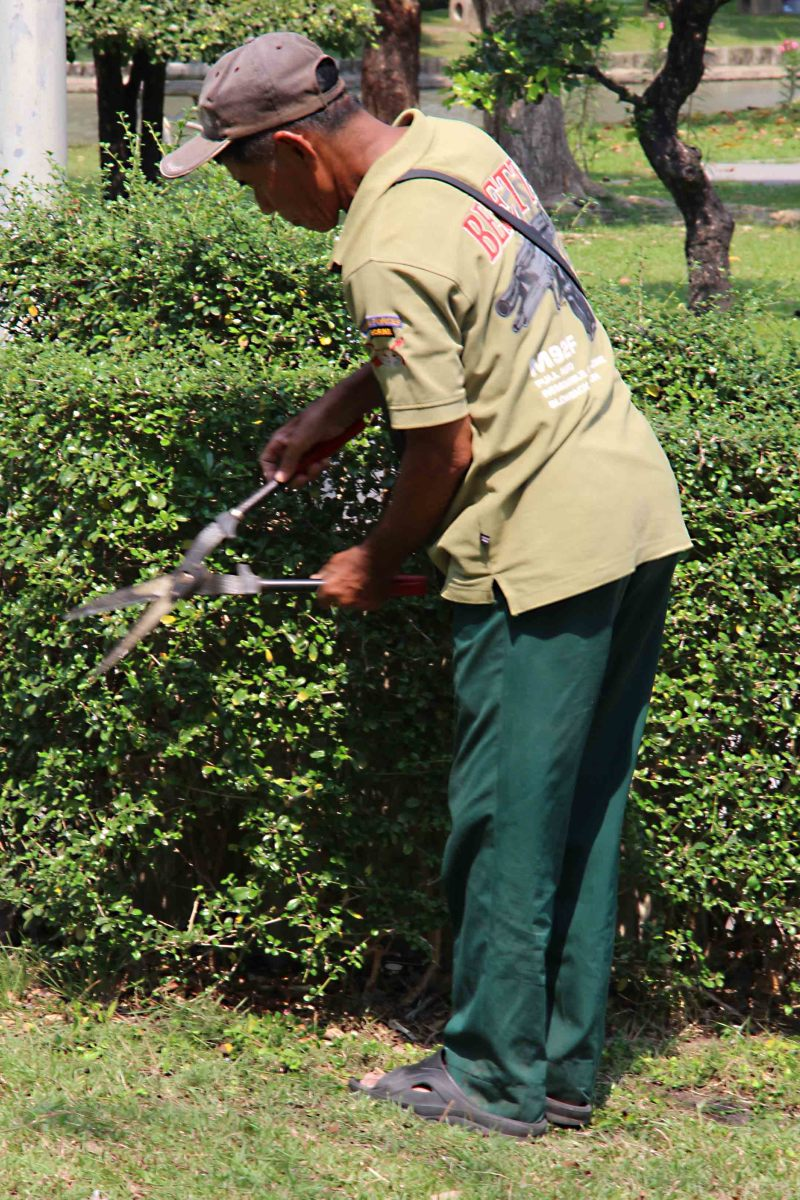 A member of the garden staff at Chatuchak Park. Bangkok public parks are tended to with meticulous care to keep them pristine. This man devoted a lot of time to ensuring this hedge was neat and tidy