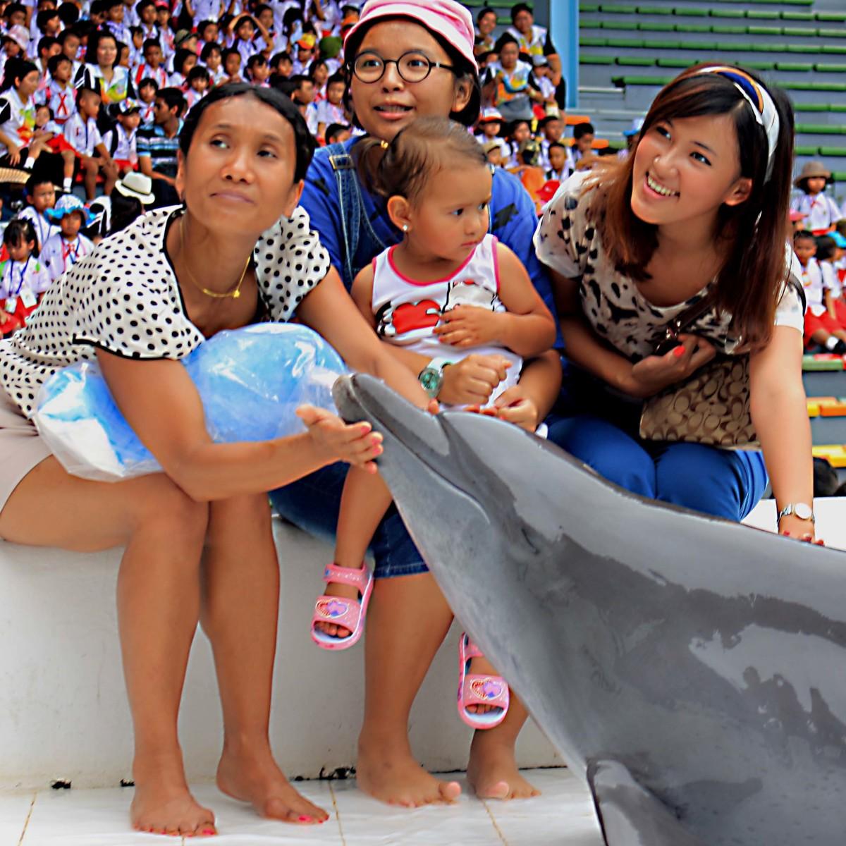 The Dolphinarium at Ocean World