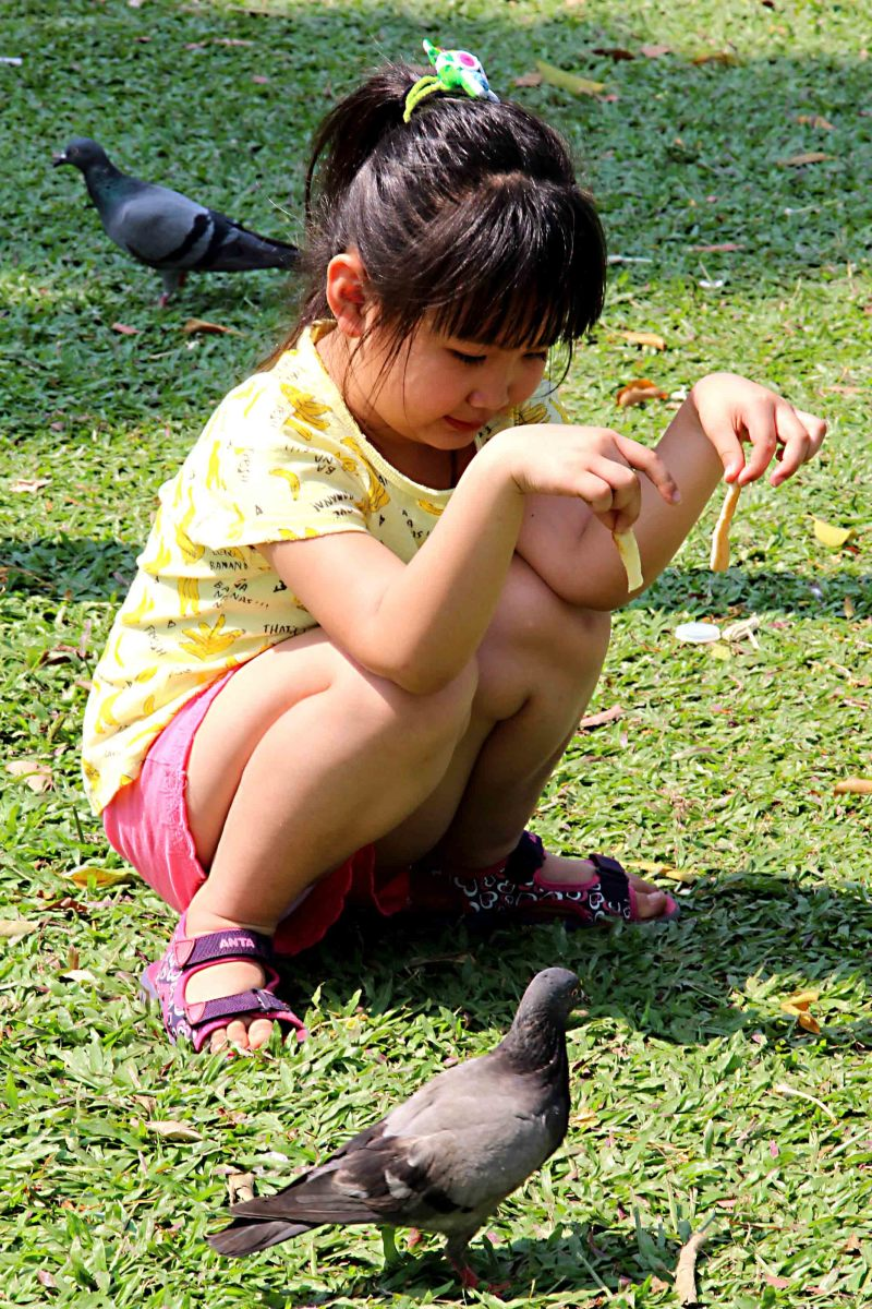 Feeding pigeons in Chatuchak Park