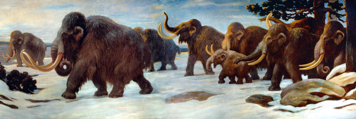 Wooly mammoths once roamed North America along with their larger, less hairy cousins, the Columbian mammoths