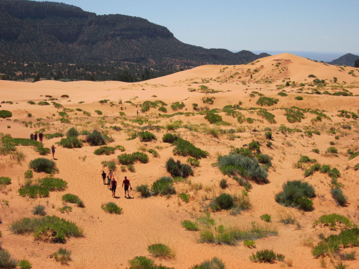 The dunes at the park.