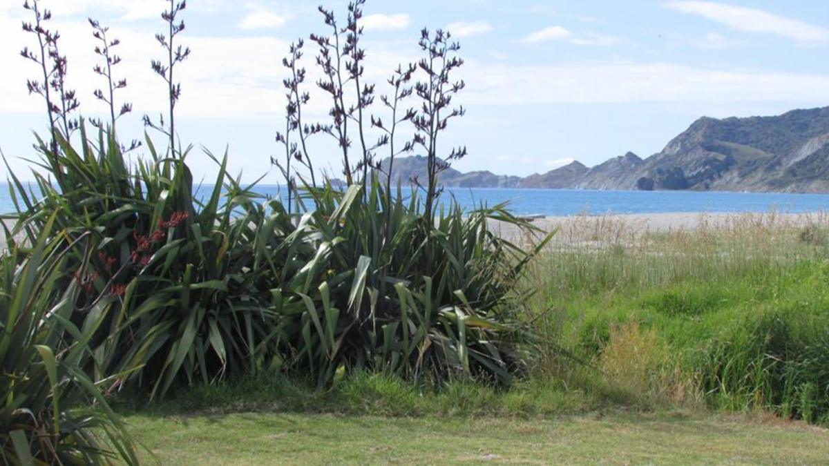 You can camp free here over the summer period with a permit from Gisborne District Council but you must have a portaloo