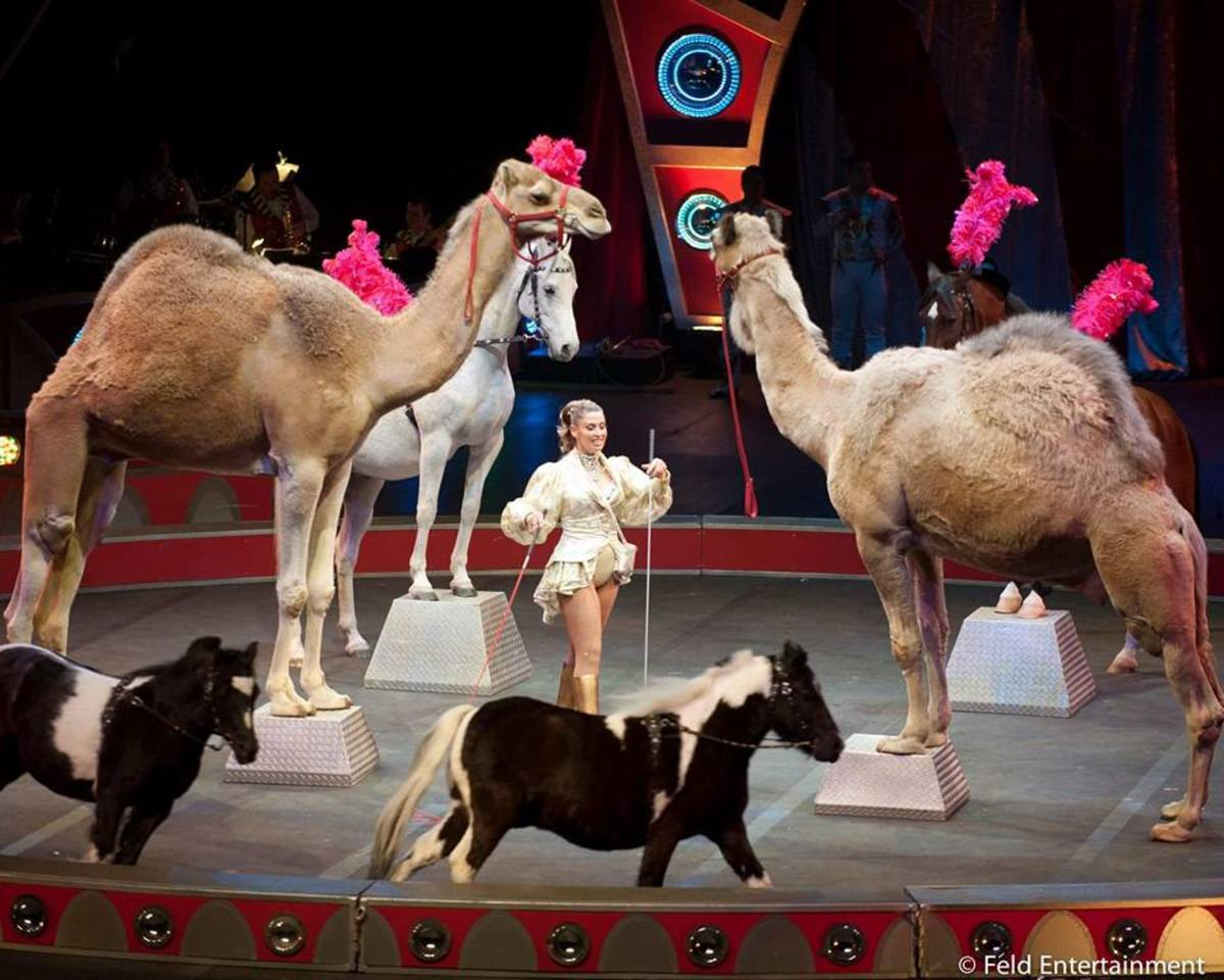 Carden Circus International