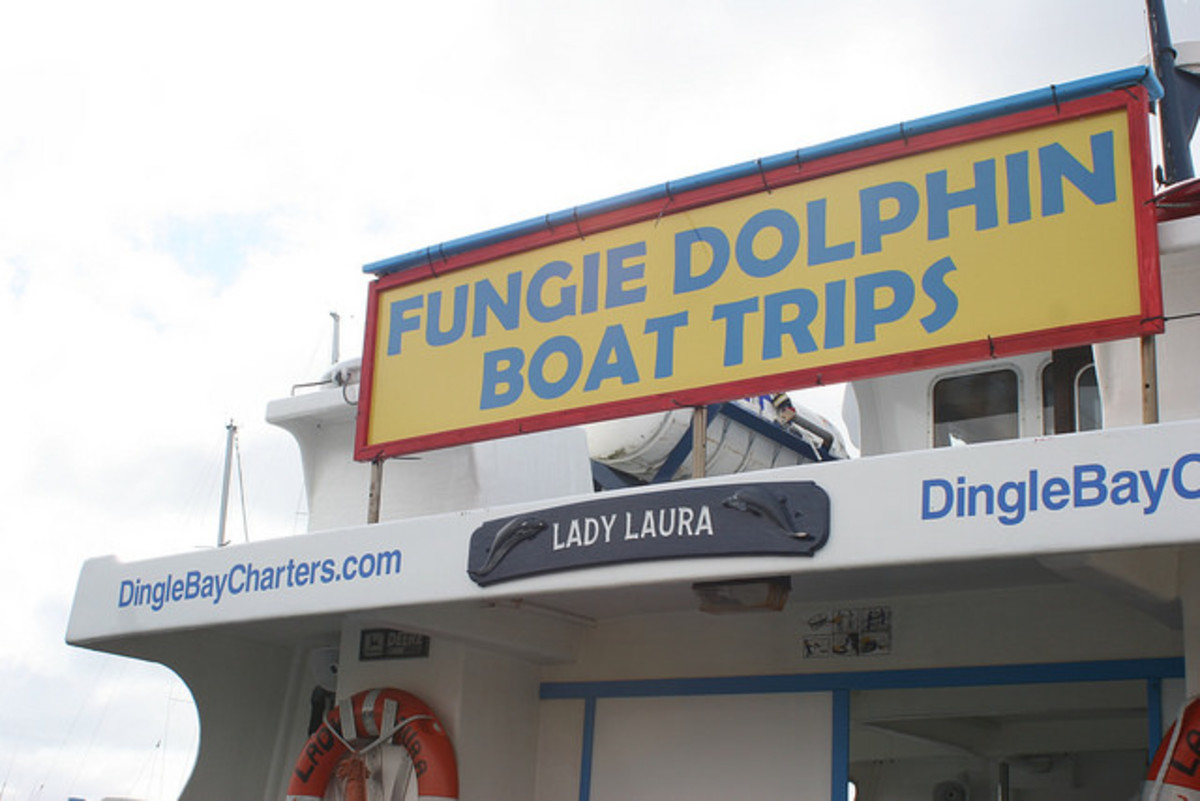 Fungie Boat Trips, Dingle, Ireland