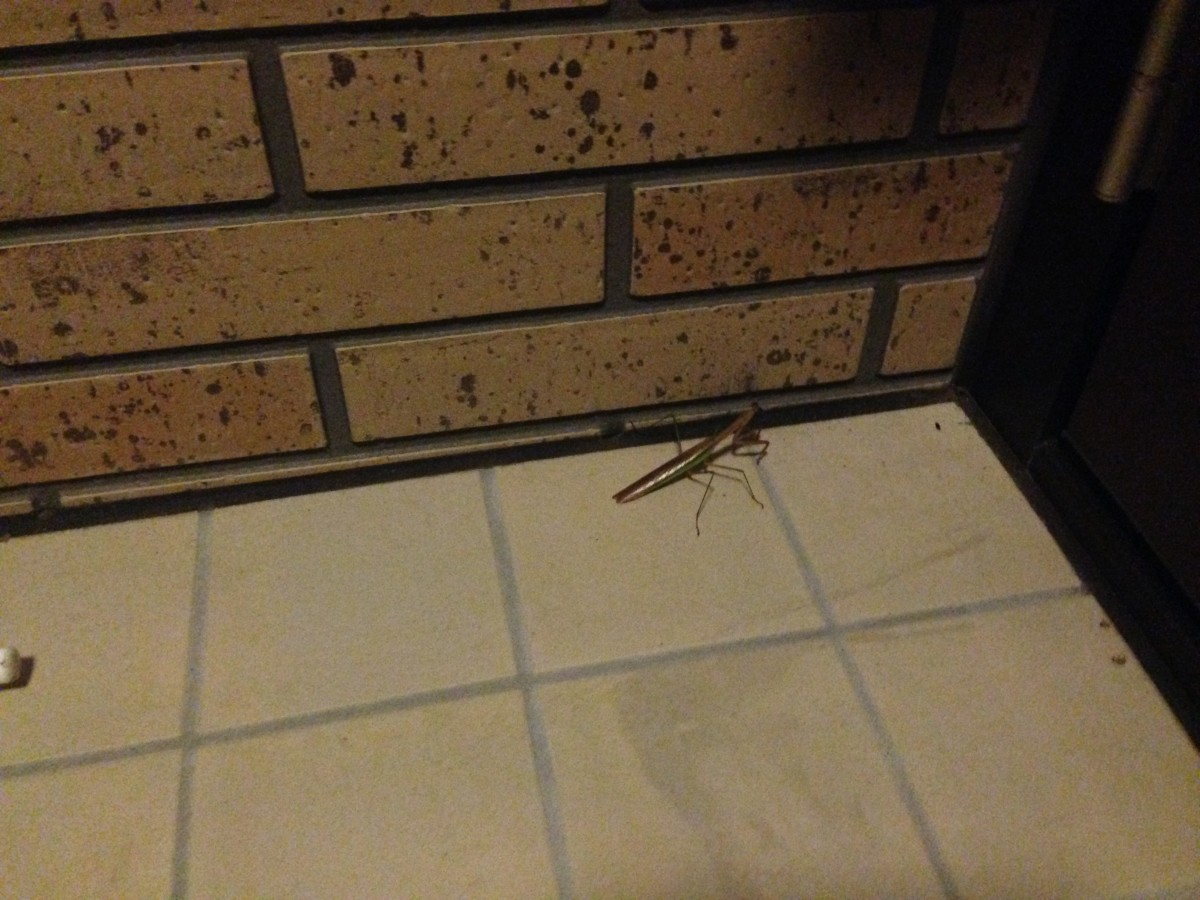 Pictured: our next-door neighbour. Also I couldn't leave the house.